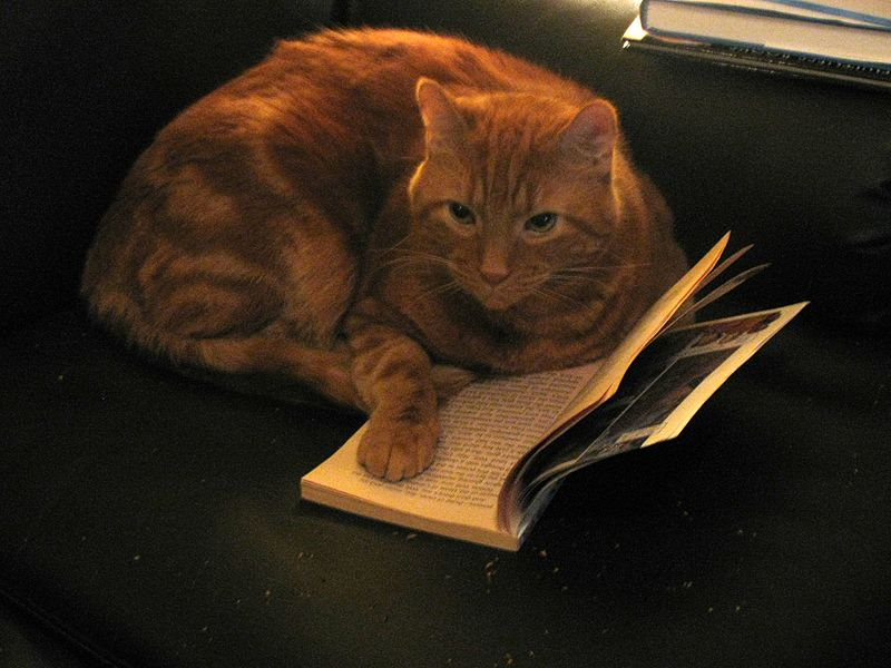Cats News -- ScienceDaily