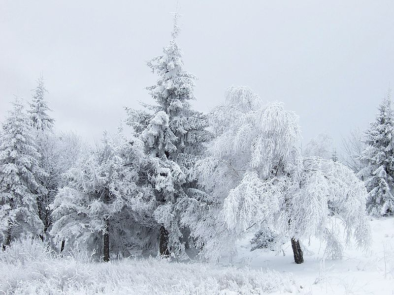 10 Great Winter Poems Everyone Should Read  Interesting Literature