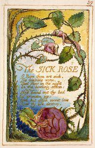 blake-the-sick-rose-illustration