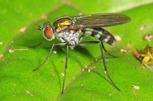 long-legged-fly-yeats-poem